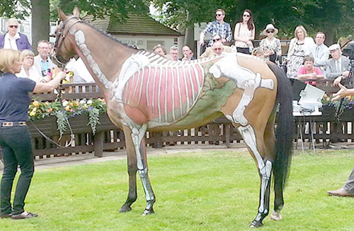 Gee Major painted at Newmarket