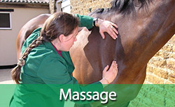 Kirsty treating a horse with equine massage
