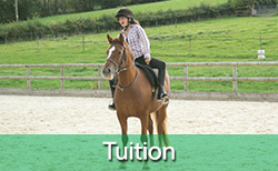 Kirsty Davis equine tuition
