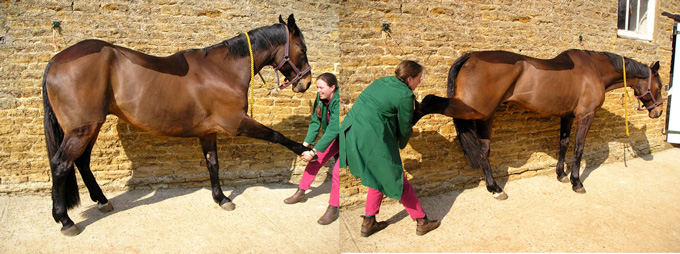 Kirsty doing equine stretches