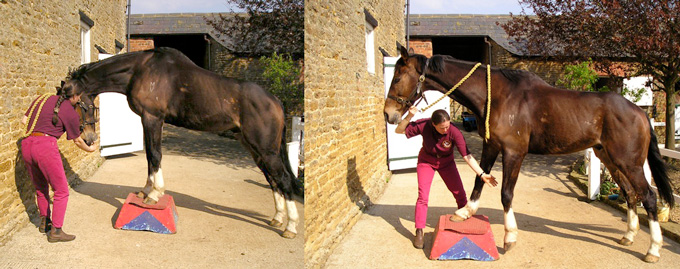Specialist equine stretches